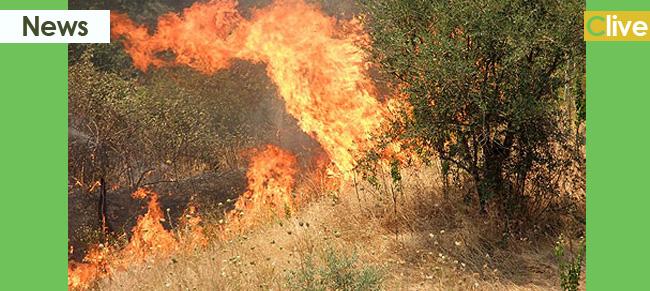 Domato incendio in contrada Santuzza-Rocca Lumia