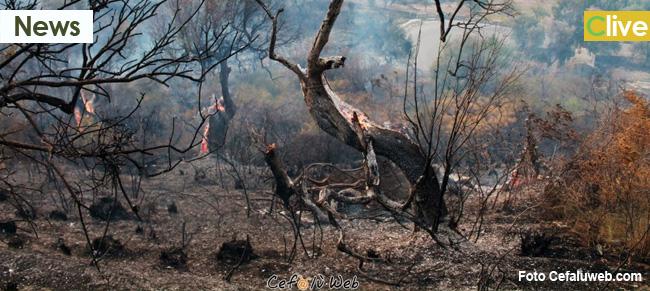 Vasto incendio di natura dolosa in zona Parco. Con i primi giorni di caldo riprende l'offensiva criminale al patrimonio boschivo madonita