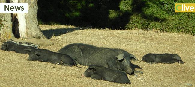Sentenza del giudice di Pace: Il Parco non è responsabile dei danni causati dalla fauna selvatica a cose o persone