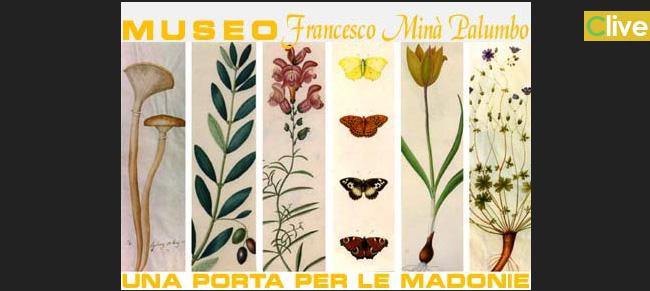Appello al Sig. Sindaco di Castelbuono per una robusta gestione del Museo naturalistico Francesco Minà Palumbo.