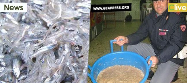 Cefalù e la pesca del novellame – gli escamotage per sfuggire ai controlli