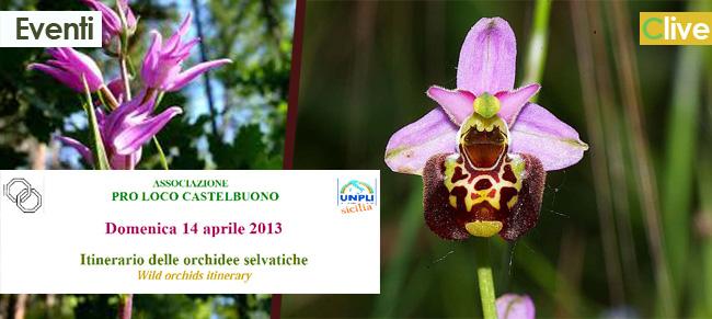 Pro Loco Castelbuono: Domenica Itinerario delle orchidee selvatiche