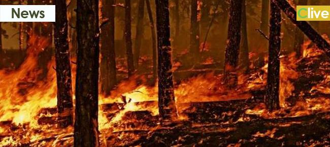 Incendi, lettera aperta alla comunità madonita