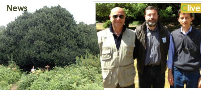Parco e Azienda Foreste sistemano Piano Pomo