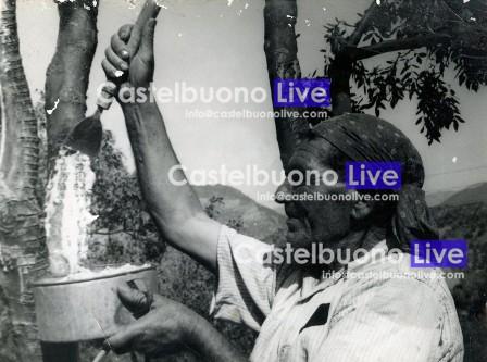 U zzu Vàrtilu alle prese con scàtula e rrasula (Foto Giuseppe Carollo)
