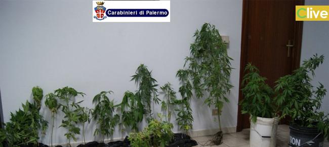 Pollina. I Carabinieri arrestano un 58enne con il pollice verde. Scoperta piantagione indoor di cannabis indica